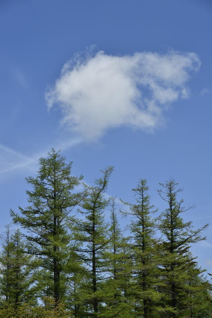 青空に白い雲