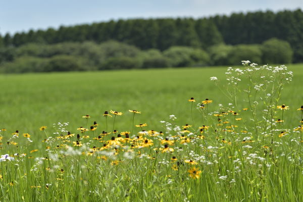 広がる草地