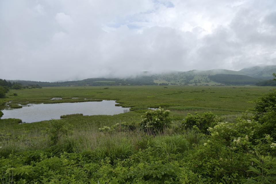 湿原が広がる
