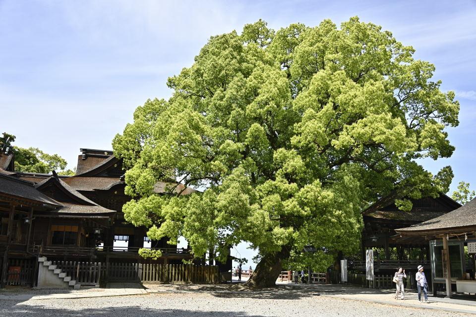 御本宮と御神木の大クス
