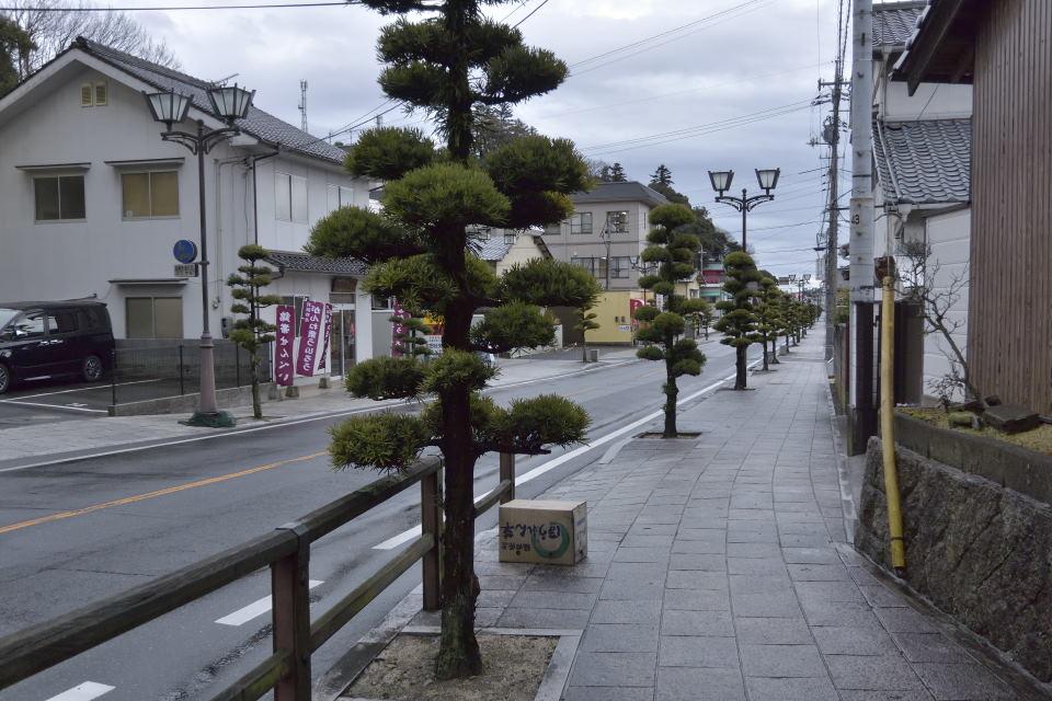 【13:44】松の街路樹